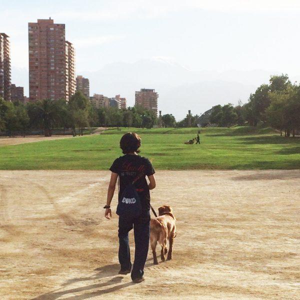 Paseos Duko – 1 paseo