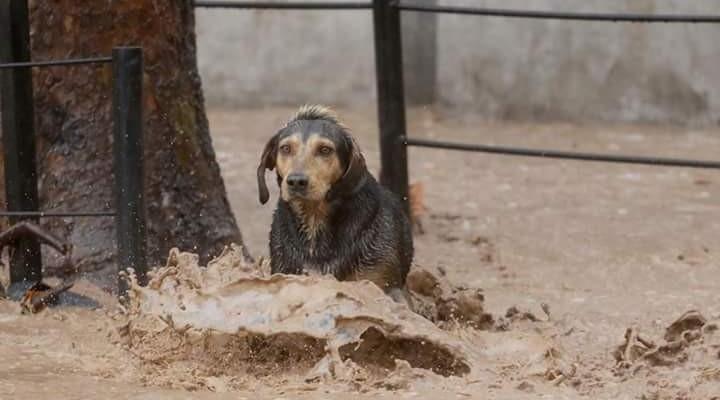 Perrito rescatado por carabineros es adoptado