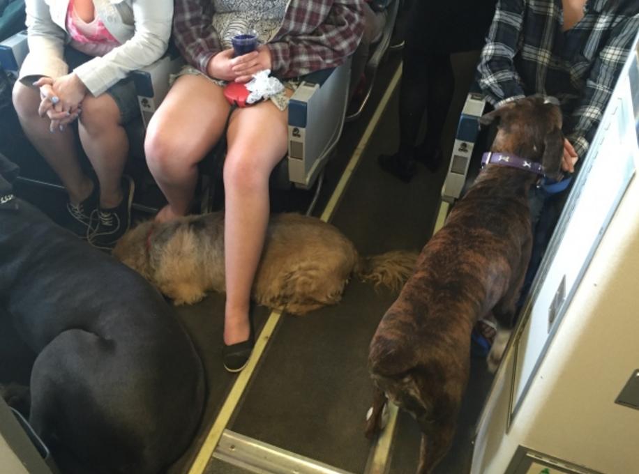 perros viajando canadian north