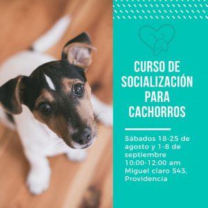 Socialización para cachorros